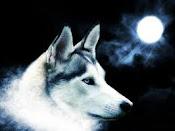 lobo blanco :3