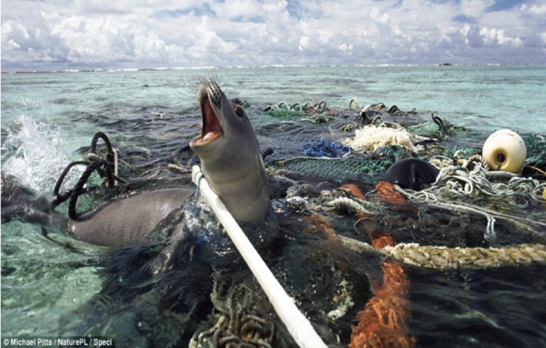 Alternativas para Cuidar el Medio Ambiente: EL IMPACTO ...