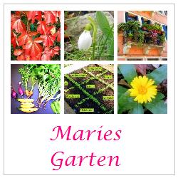 http://vontagzutag-mariesblog.blogspot.co.at/p/garten.html