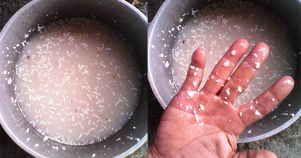 Rýži jsem namočila ve vodě a nechala jsem ji pár dní v lednici. To, co jsem pak uviděla mě opravdu velmi zneklidnilo