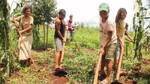 Resultado de imagen para agricultura de los epera