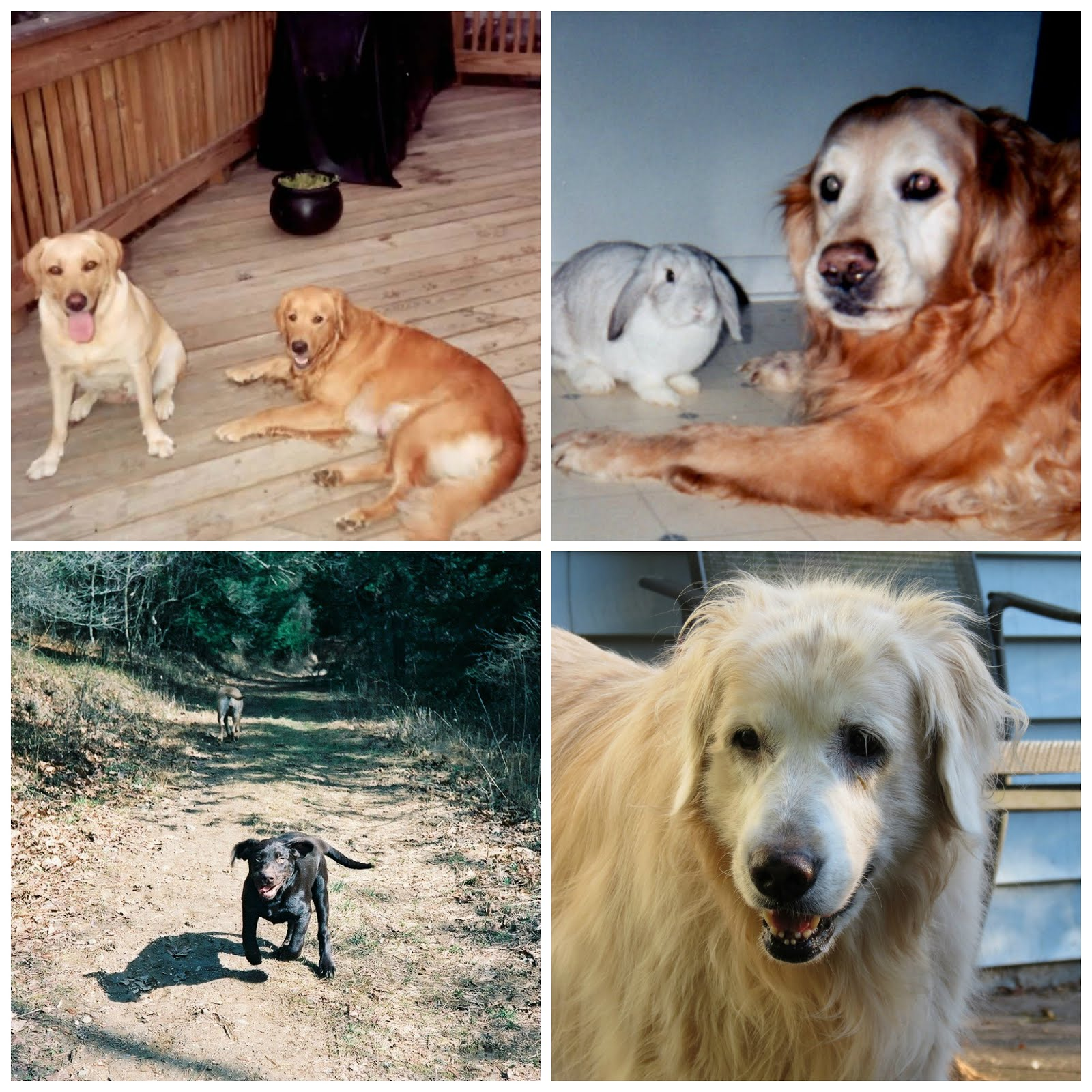 My Dogs: Sunshine, Daisy, Maui and Goldie