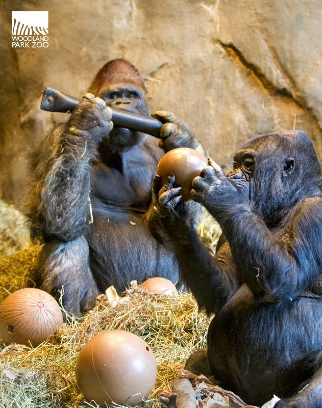 Woodland Park Zoo Blog February 2015