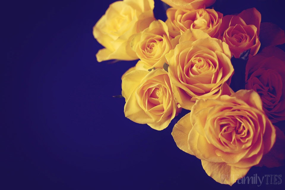 Pink and yellow roses on a black background