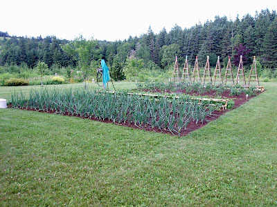 The vegetable garden was doing pretty good back in mid July.