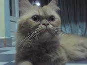 My Oyen