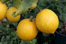 Vitamin C Source Lemons