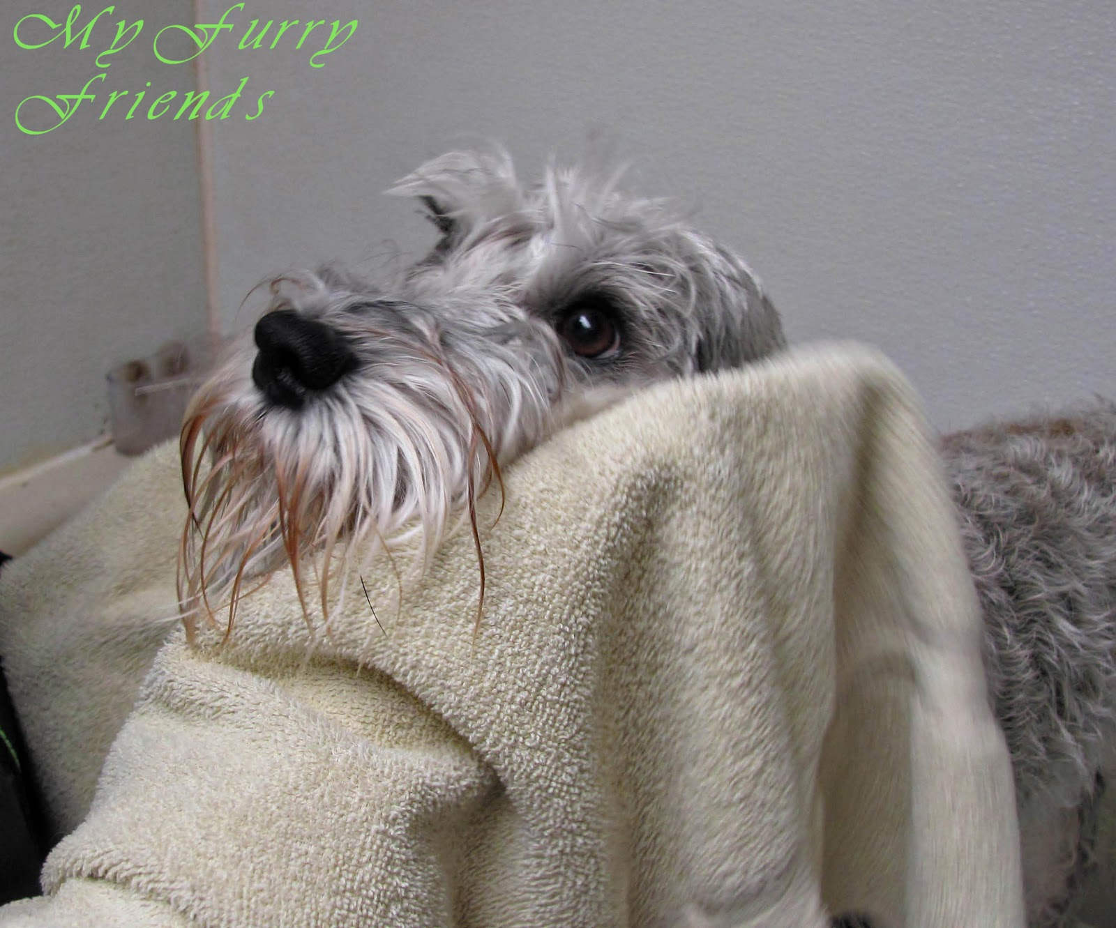 Grooming your furry friend why does it cost so much to have my dog grooming your furry friend solutioingenieria Images