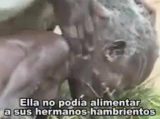 VIDEO ESTREMECEDOR, MIRA LO QUE ES TENER HAMBRE!!