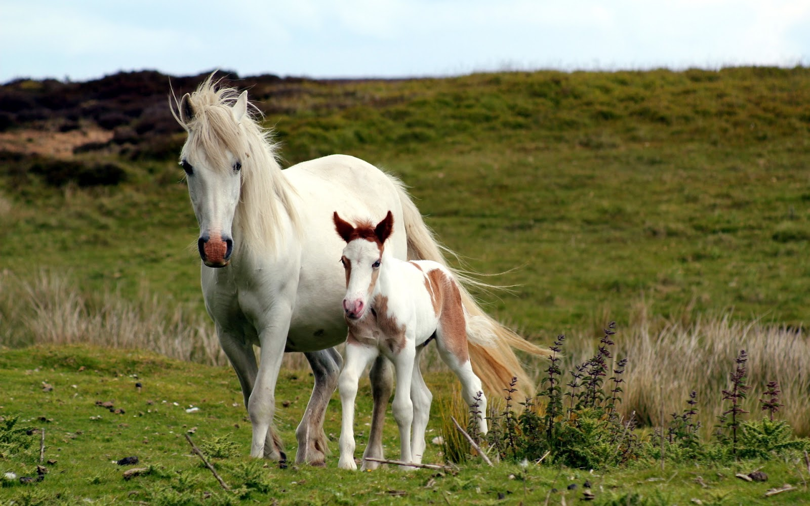 Bella familia de caballos paseando por los bellos paisajes
