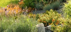 Fotorelacje z tworzenia ogrodów