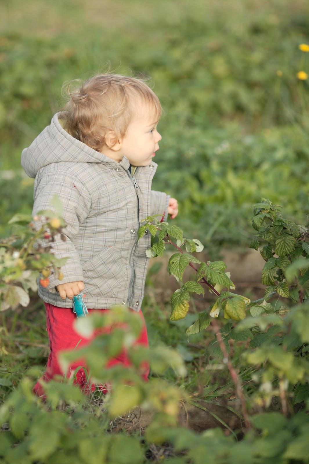Dans le jardin en novembre for Jardin que planter en novembre