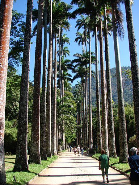 ipe de jardim botânico:BetaniaCaneca.: OUTONO NO BRASIL::RECOLHIMENTO::CORES & SAUDADES