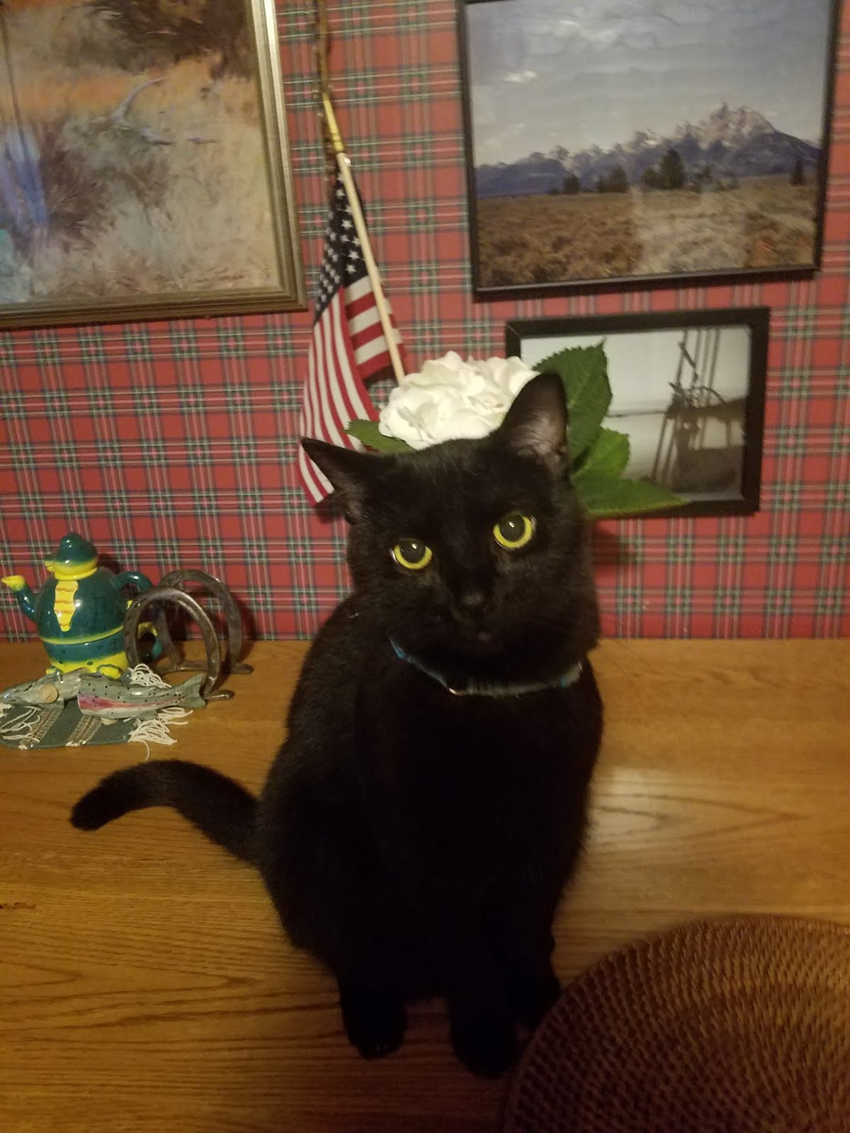 Jackson,  Conservative Cat Patriot