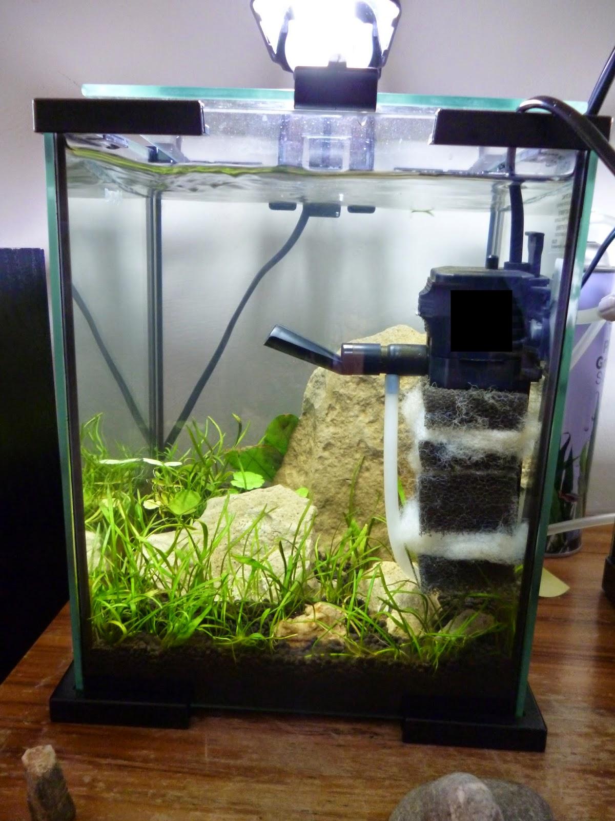 Aquariums poissons et plantes d 39 eau douce juin 2014 for Nano aquarium eau douce