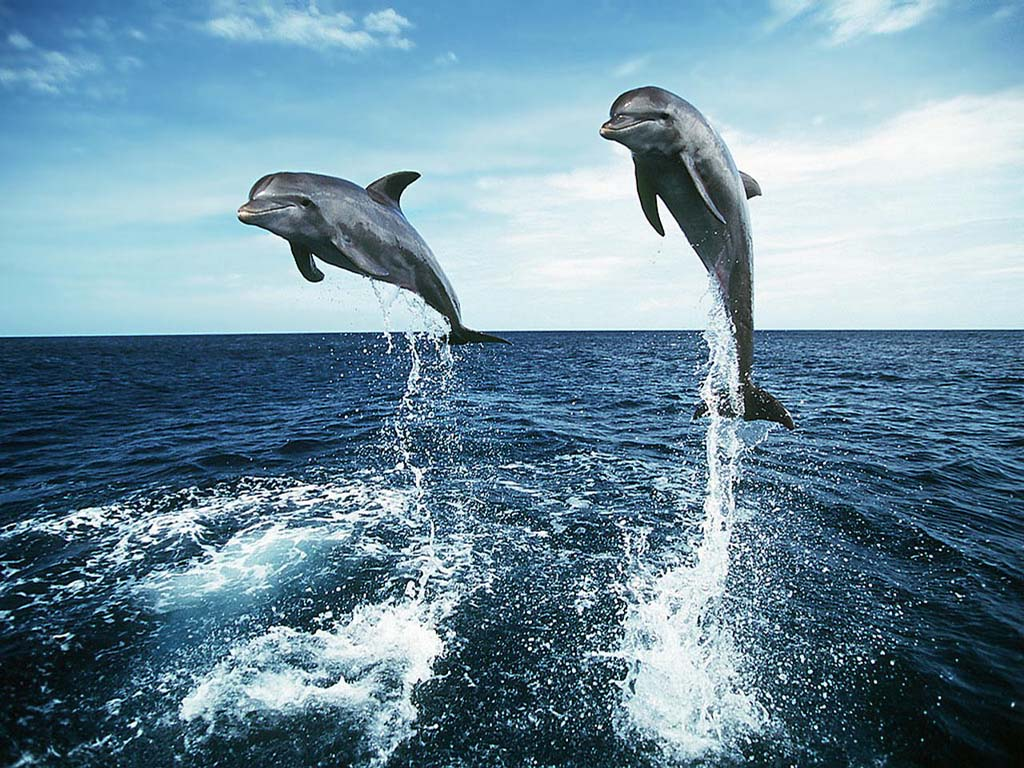 Free Wallpaper for Desktop Dolphins