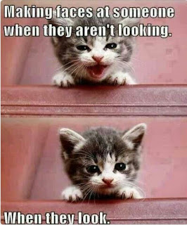 Funny cat sayings making faces at someone