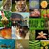 Rangkuman Pertumbuhan dan Perkembangan Makhluk Hidup