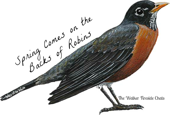 Spring Means Robins