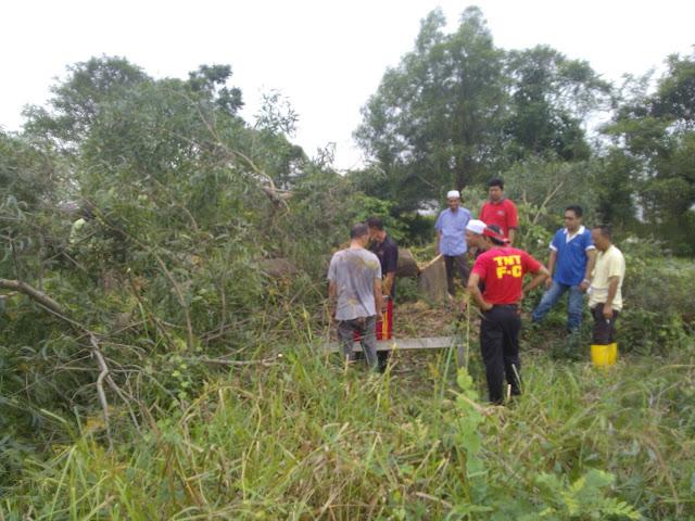 Tumbang juga pohon yang besar hasil kerjasama kita