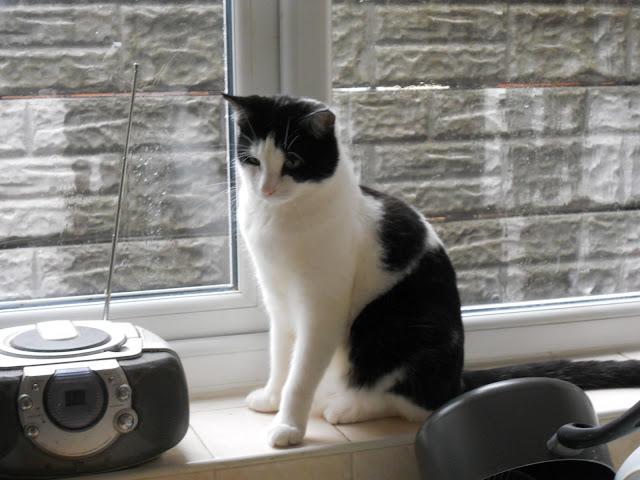 Cody sat on windowsill