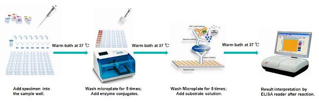 test kit elisa , elisa kit , hệ thống elisa , kiểm tra dư lượng kháng sinh