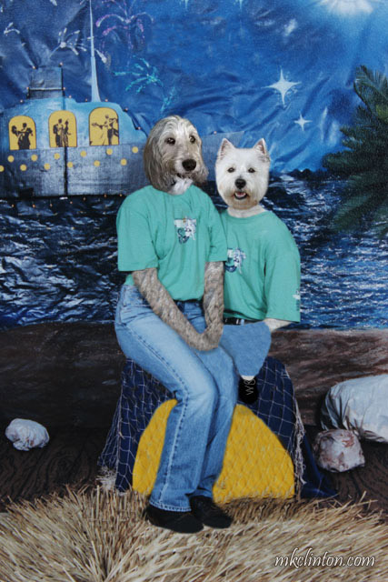 Westie and GBGV dressed in jeans and tees