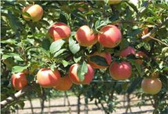 cây giống đại học nông nghiệp hà nội