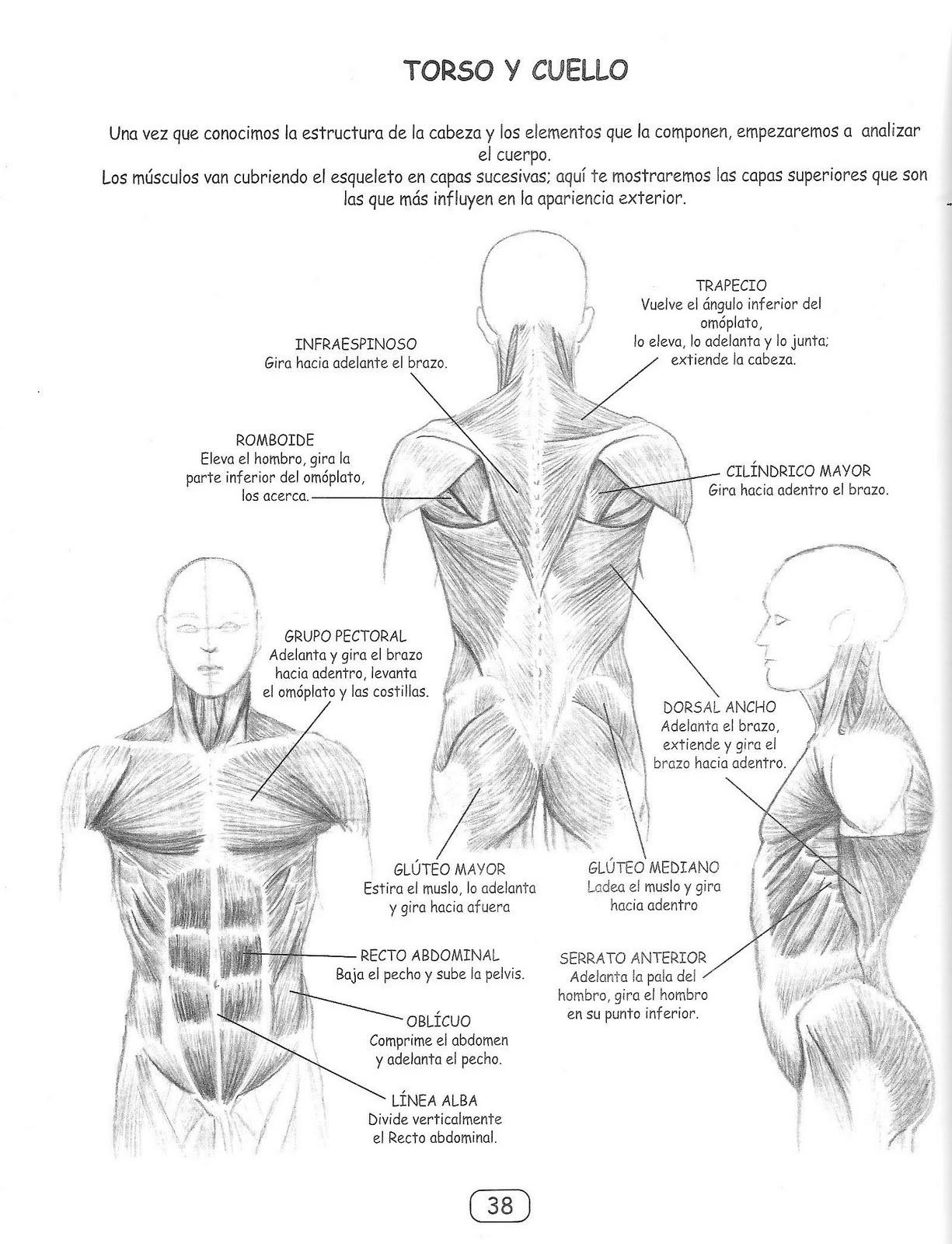 Taller de Diseño Grafico: Anatomía artística