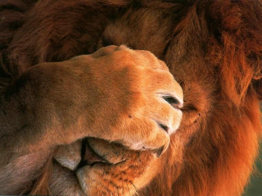 http://2.bp.blogspot.com/-_wmP1KP2DNI/TeyLQqle38I/AAAAAAAAAFI/pKKhU3H_eBI/s1600/Live-me-Alone-Lion-1-6859HHAFLR-1024x768.jpg