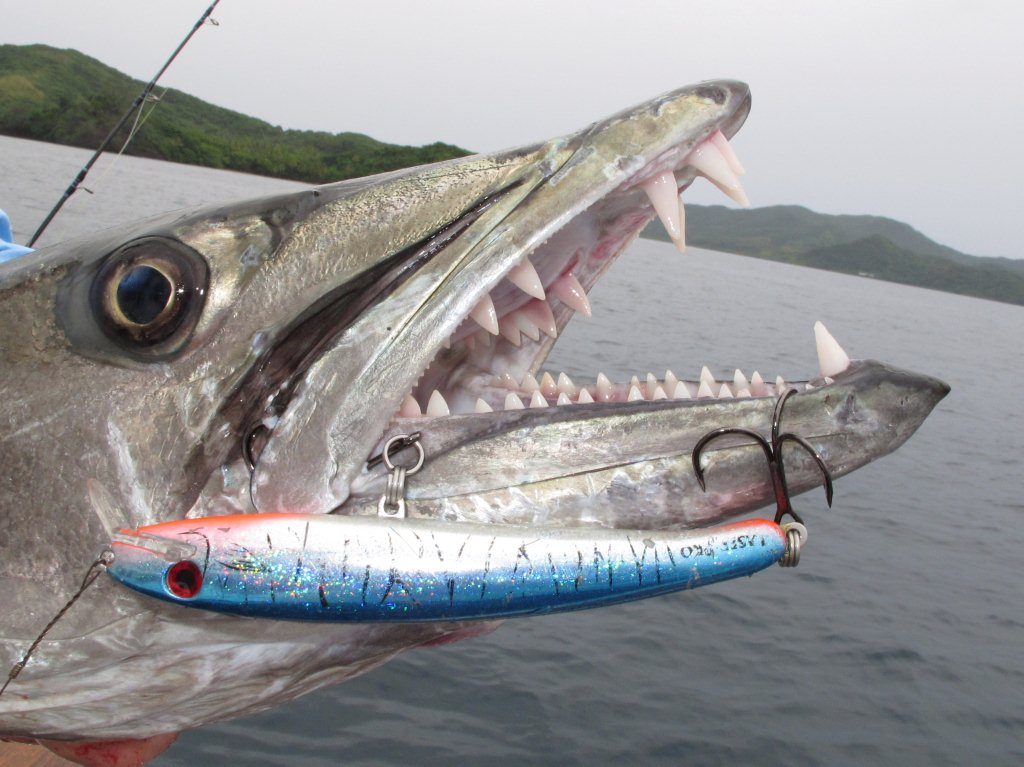 Big Fishes of the World  BARRACUDA GREAT  Sphyraena barracuda World Record Saltwater Fish