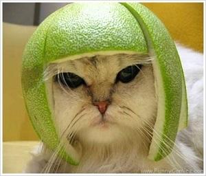 gambar kucing lucu dan cantik