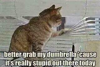 better grab my dumbrella 'cause it's really stupid out there today