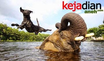 Kisah Unik Persahabatan Anjing Dan Gajah