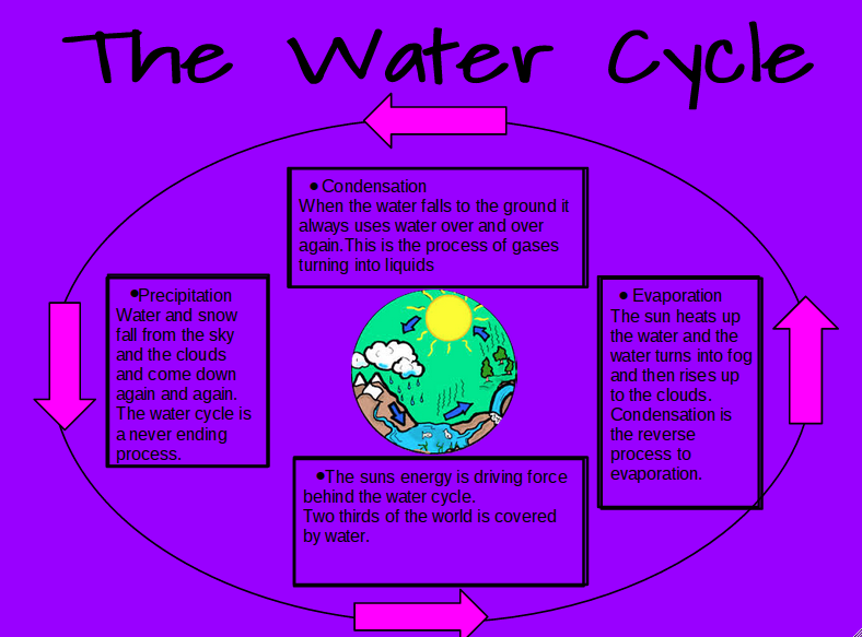The water cycle. - GCSE Science - Marked by Teachers.com