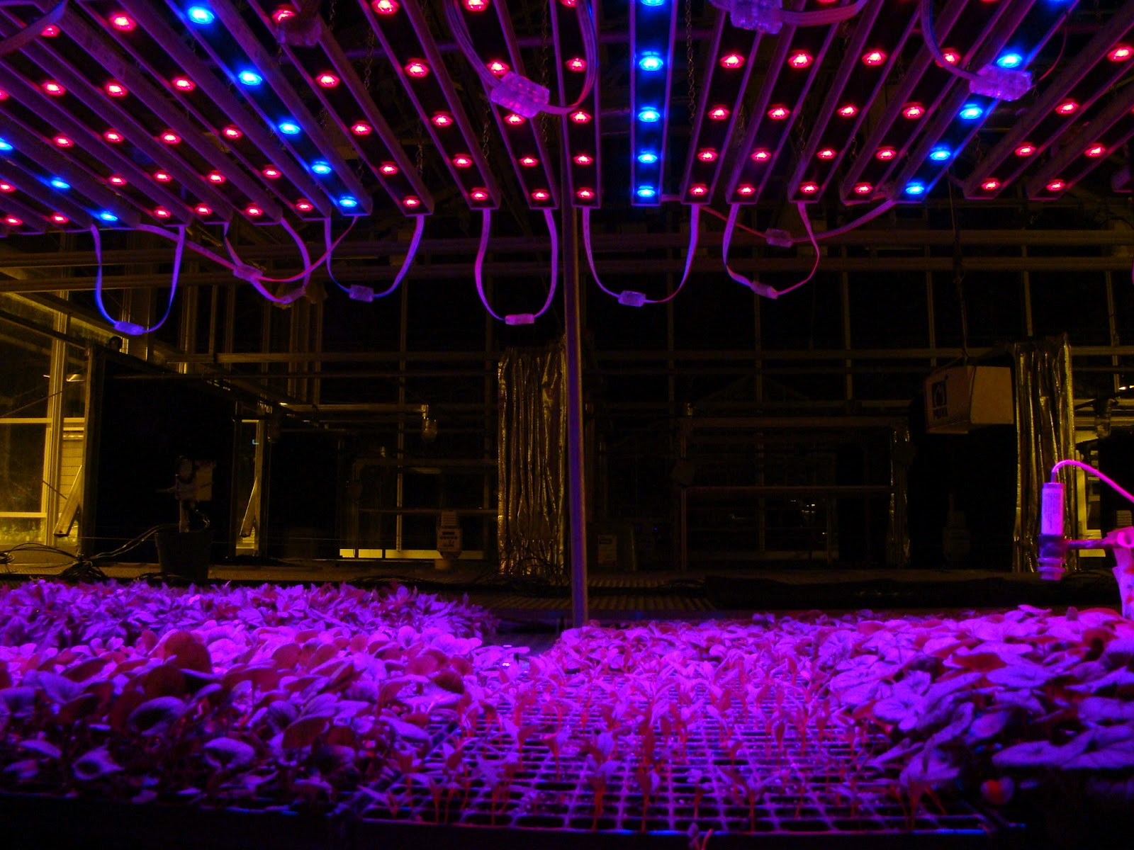 Improving greenhouse production with led lights hort americas improving greenhouse production with led lights hort americas corporate blog arubaitofo Choice Image