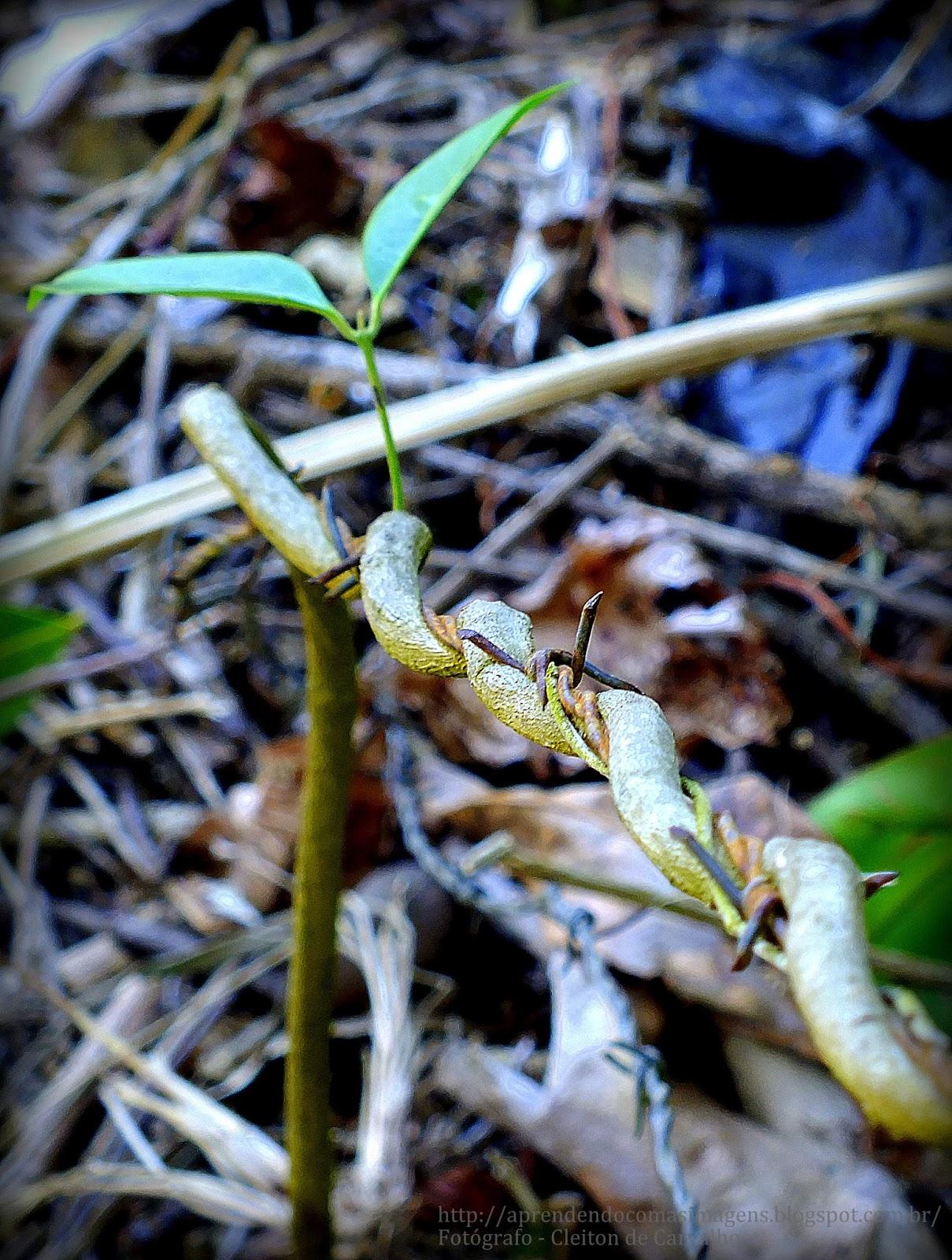 http://aprendendocomasimagens.blogspot.com.br/ - vida e sentimentos
