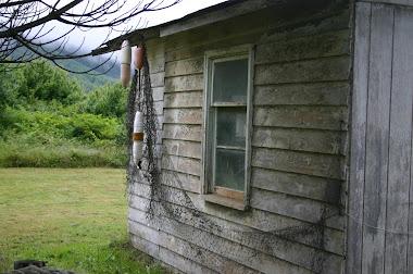 Jaynee's House