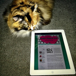 cat reading blog