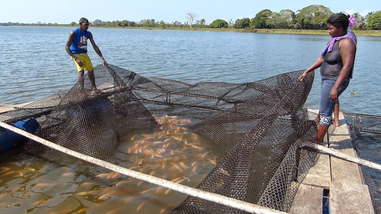 Repisnobol una experiencia de agua dulce for Jaulas flotantes para piscicultura