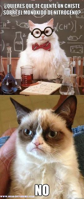 Gato quimico y Grumpy cat