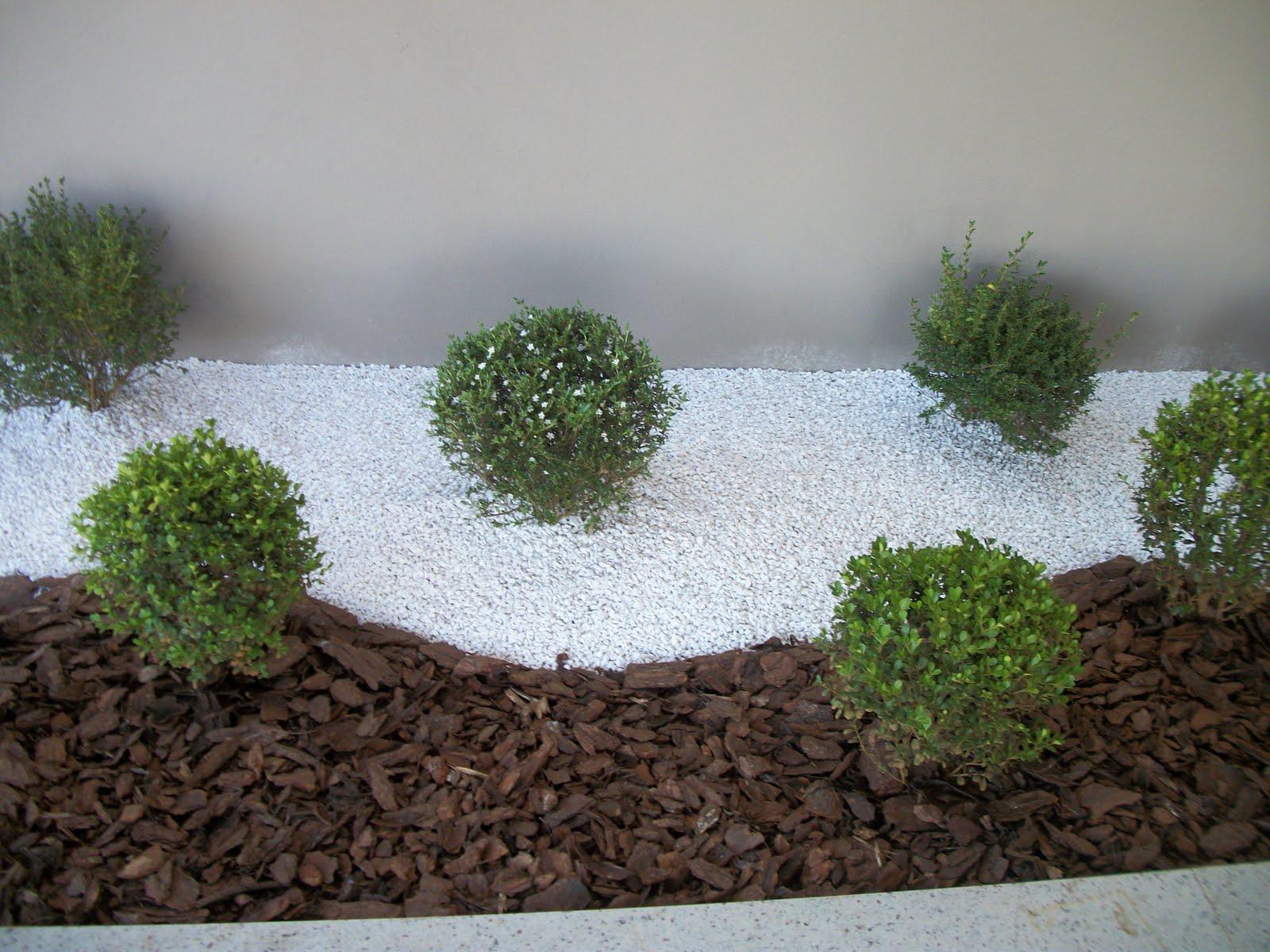 famosa cica linda planta de sol tambem ela no centro do jardim #4A6032 1600 1200