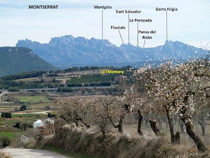 Panoràmica cap a llevant amb els ametllers florits i Montserrat al fons