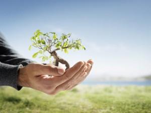 Imagen por la Semana Forestal Nacional (La vida de un árbol está en nuestras manos)
