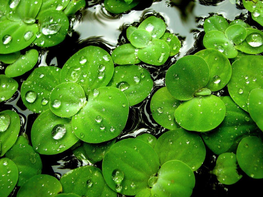 http://2.bp.blogspot.com/-_yraIq_4SxE/TfPX1Np4SCI/AAAAAAAAANE/RhaPqGaaSHs/s1600/green_lilies.jpg