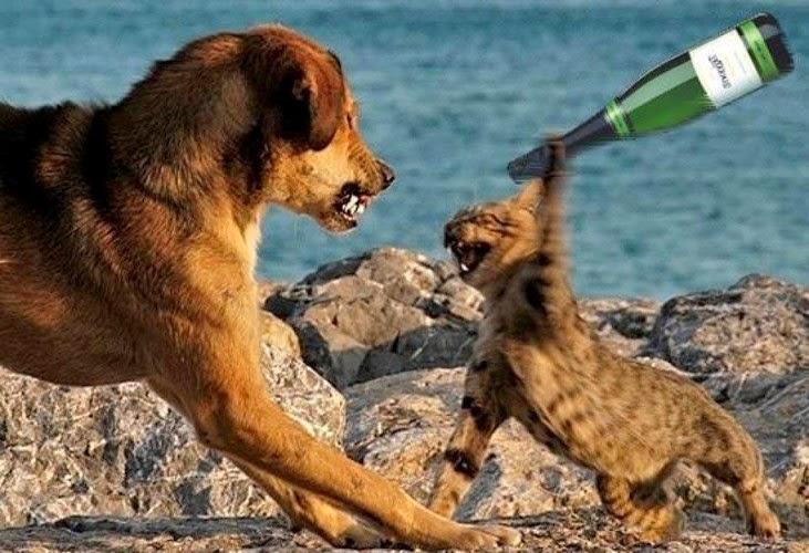 """Ảnh vui """"Đại chiến"""" chó mèo"""