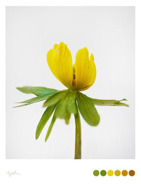 GH Yeoh,fotografia,photography,Shanghai,my garden,jardin,flor,flores,flower,green,verde,yellow,amarillo,欢迎,welcome