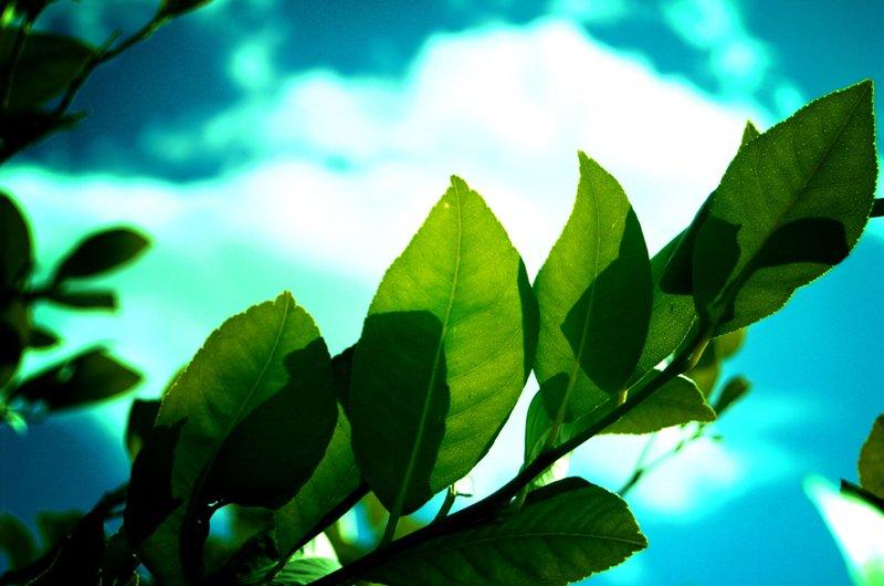 FE BÍBLICA: ¿Cuál es la Verdad: Creación o Evolución?