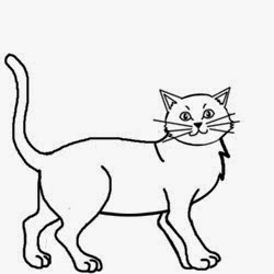pictures how to draw a cat