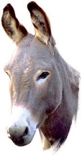 الرجل من الطفولة الى بعد الزواج Donkey2